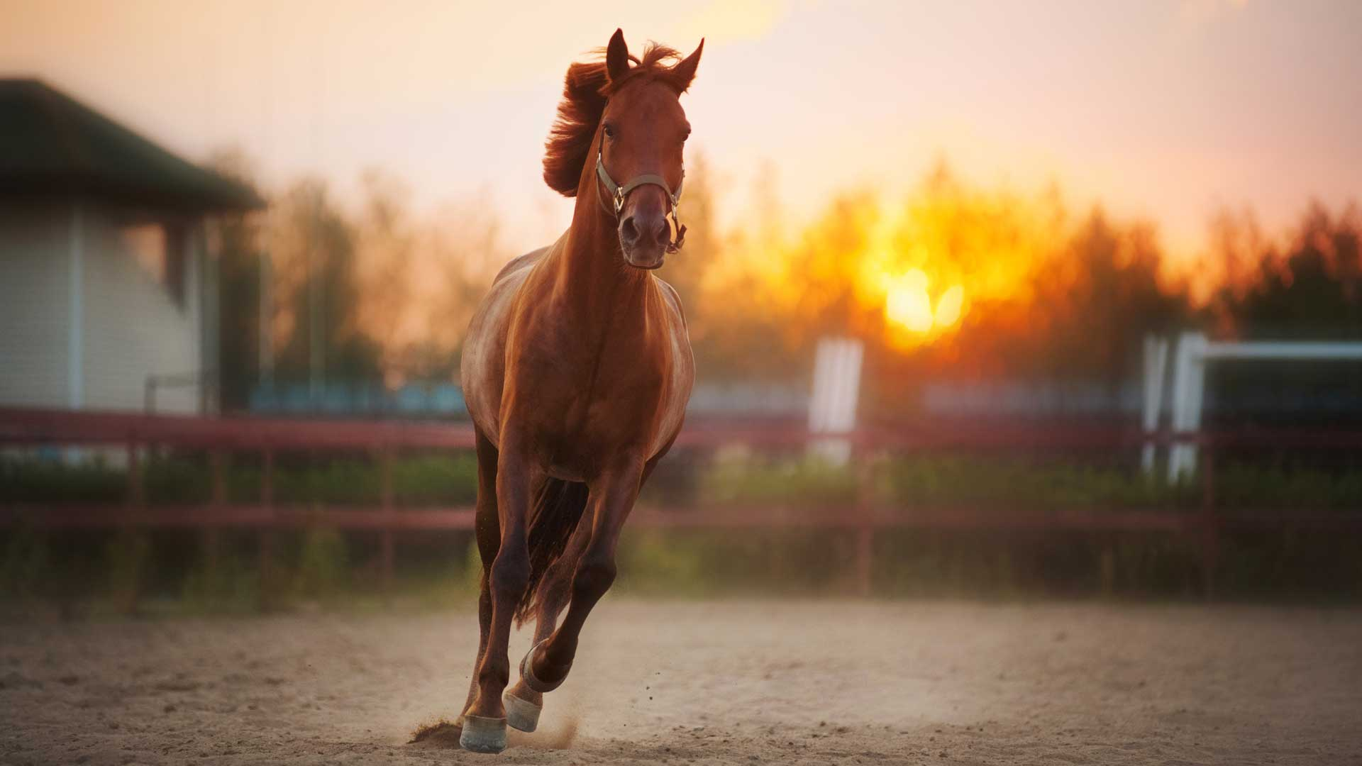 EQUINE - Animal PEMF Therapy